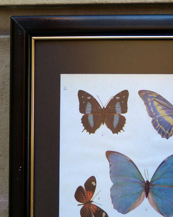 Bugs and Butterflies Prints